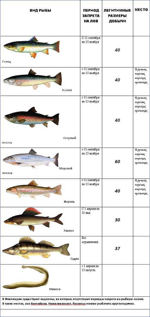 какие есть виды рыбной ловли