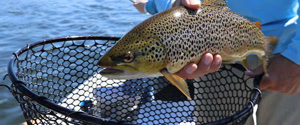 кумжа рыбалка